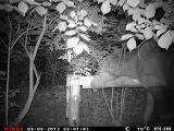 Лоси в Танаевском лесу